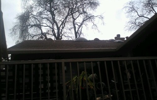 Cleaning House House Cleaning Elk Grove